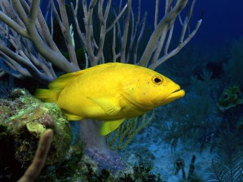 Красочные рыбки