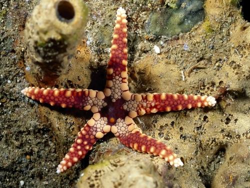 Тайны морского дна