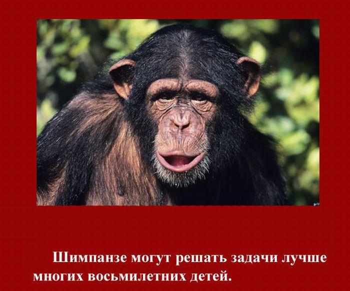 fakti_2011_04 (700x581, 77Kb)