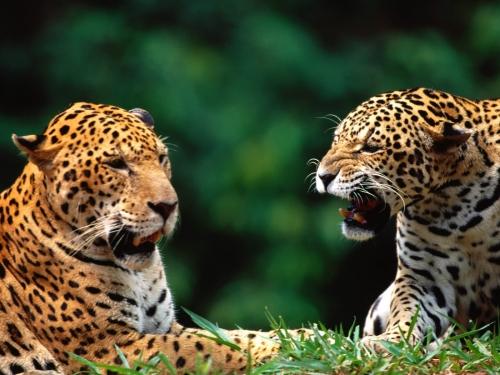 Всякому существу в этом мире нужна пара