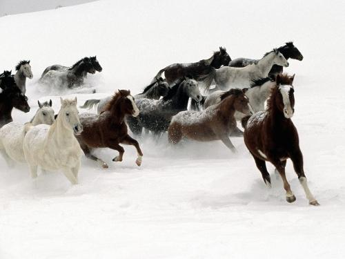 Эти удивительные лошадки