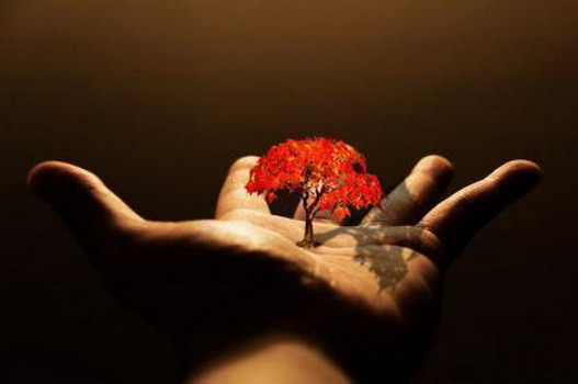 4097126_45040308_33009051_1222797859_Life_in_Hand (527x350, 26Kb)