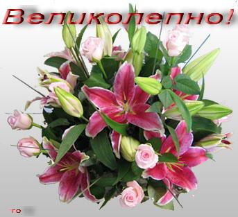 http://img0.liveinternet.ru/images/attach/c/4/82/626/82626740_VELIKOLEPNO_2_.jpg