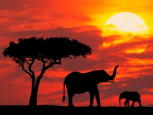 Животный мир: родители и дети