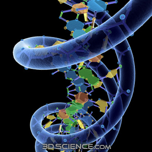 3d_model_dna_w_phosphate_1 (300x300, 94Kb)