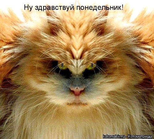 0_170ae_ed1135d_XL (500x453, 71Kb)