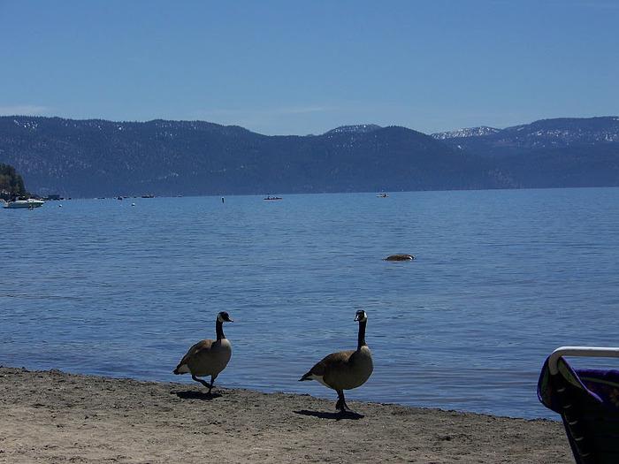 Озеро Тахо – курортный рай Америки 69771