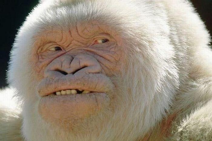 primates_10 (700x468, 50Kb)
