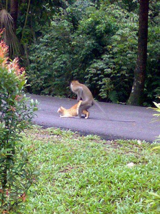 обезьяны ловят вшей