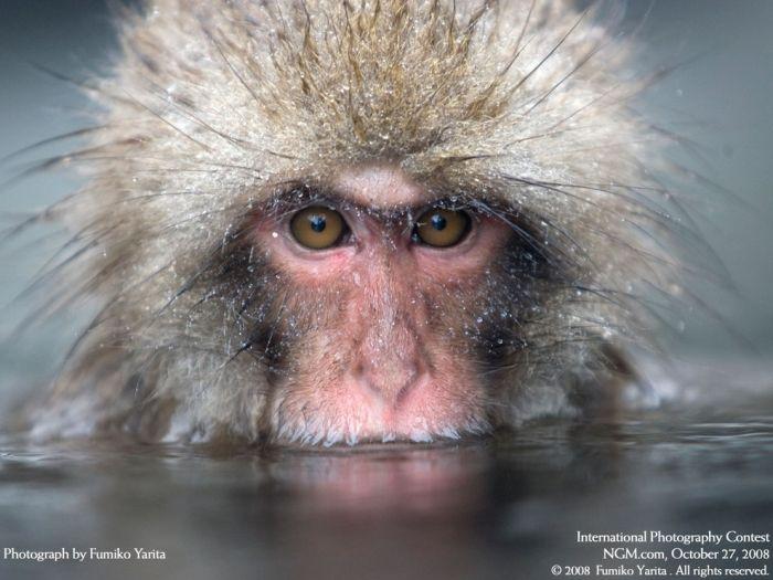 primates_25 (700x525, 58Kb)