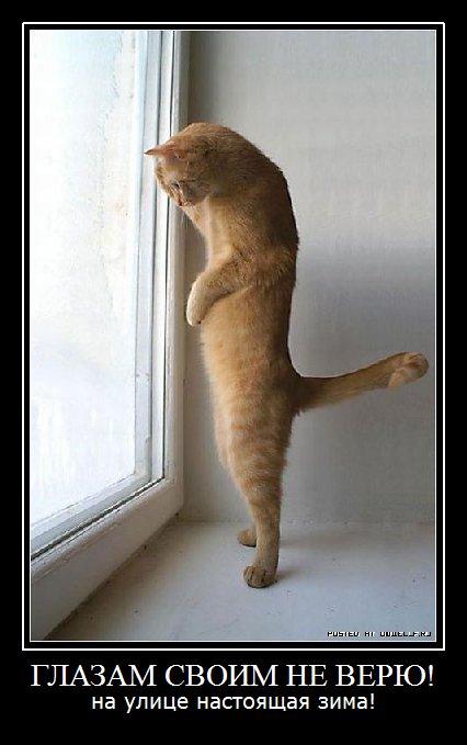 фотоприколы с кошками: