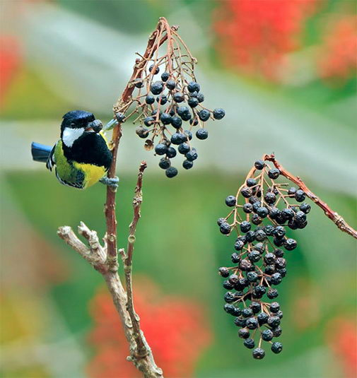 птицы2 (505x535, 50Kb)