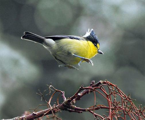 птицы7 (505x418, 36Kb)