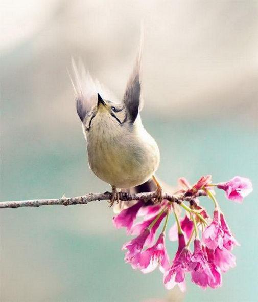 птицы9 (505x590, 34Kb)