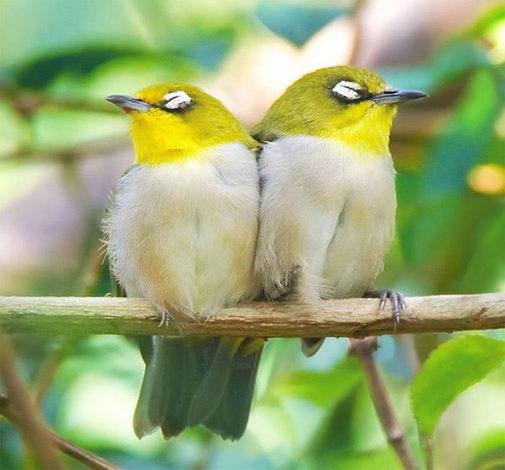 птицы11 (505x470, 38Kb)