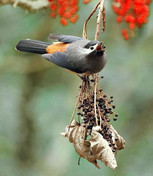 птицы13 (505x579, 50Kb)