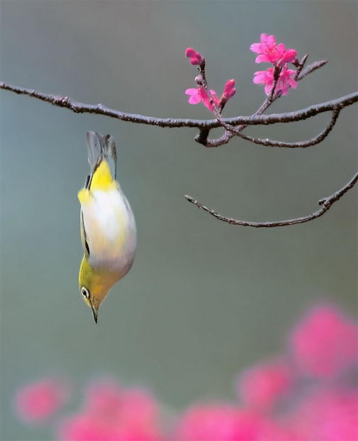 птицы (505x622, 25Kb)