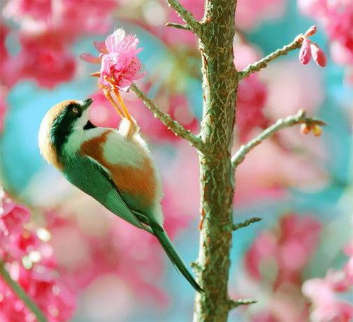 птицы1 (505x461, 42Kb)