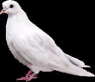 duif (192x167, 28Kb)