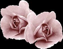roosje (222x173, 57Kb)