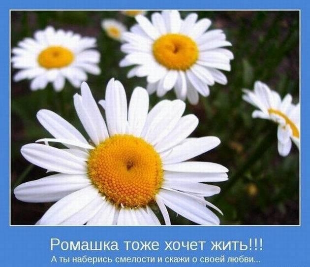 Мотиваторы позитивного настроения 17 (630x542, 47Kb)