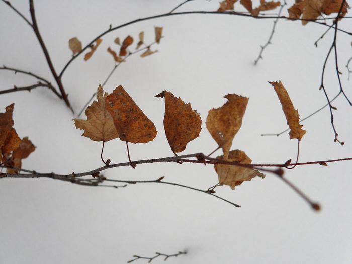 листья/1326120874_DSC00013 (700x525, 185Kb)
