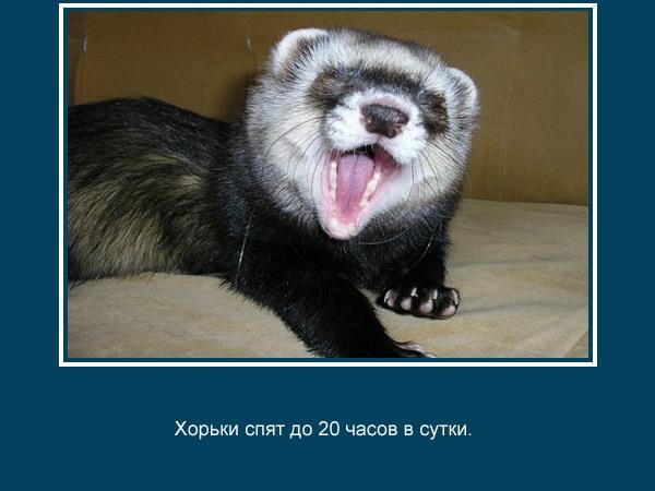 прикольные факты картинки 16 (600x450, 56Kb)