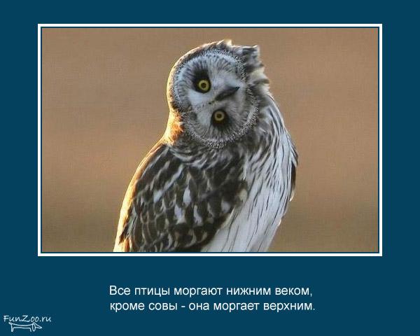 прикольные факты картинки 31 (600x480, 53Kb)
