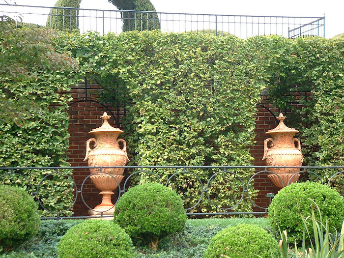 Ladew Topiary Gardens 59020