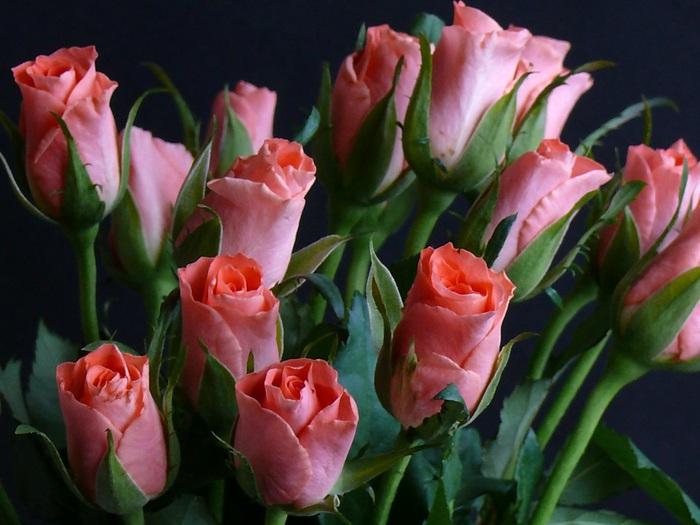 rose_107 (700x525, 110Kb)