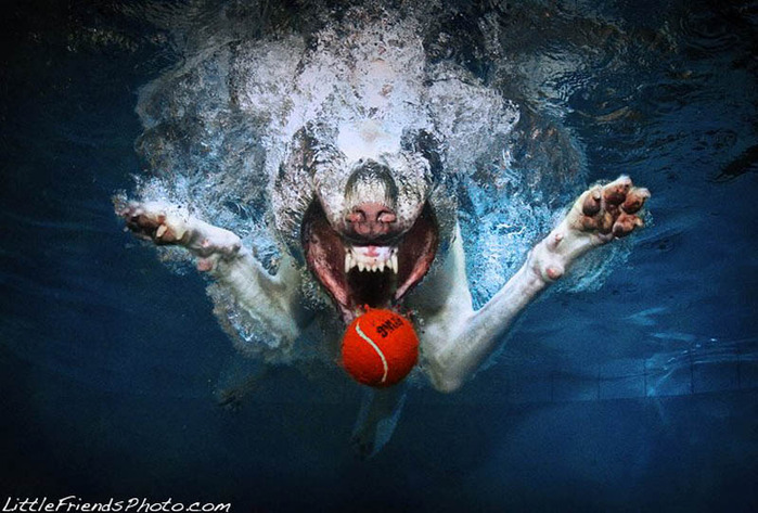 underwater-photos-of-dogs-seth-casteel-2 (700x473, 121Kb)