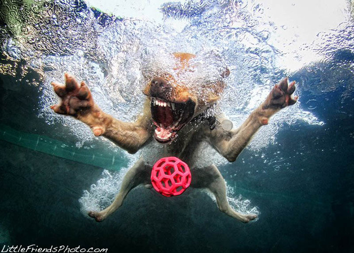underwater-photos-of-dogs-seth-casteel-5 (700x499, 158Kb)