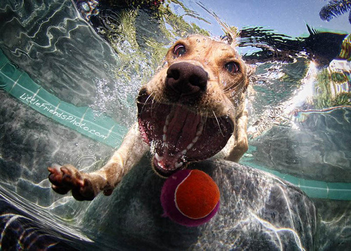 underwater-photos-of-dogs-seth-casteel-6 (700x502, 167Kb)
