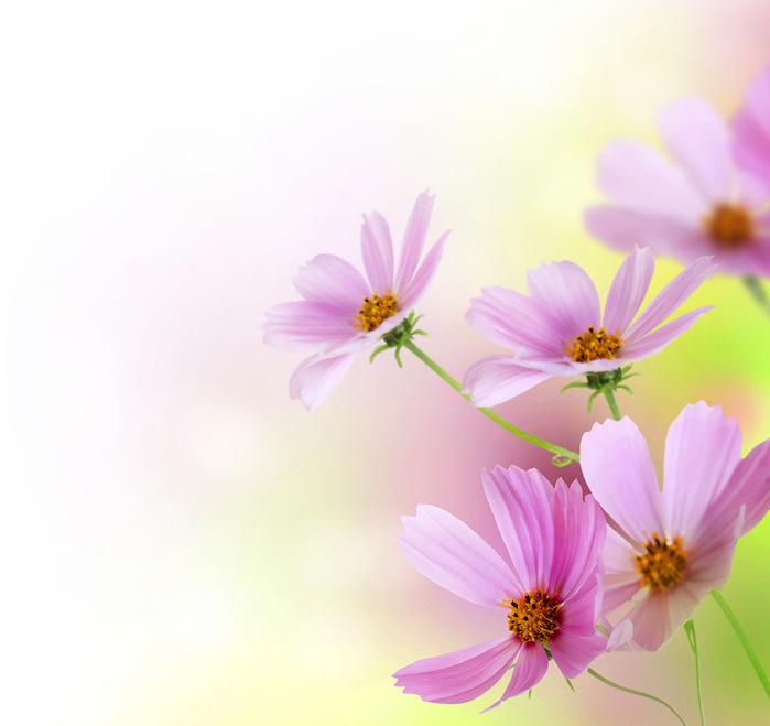 Картинки а4 цветы 3