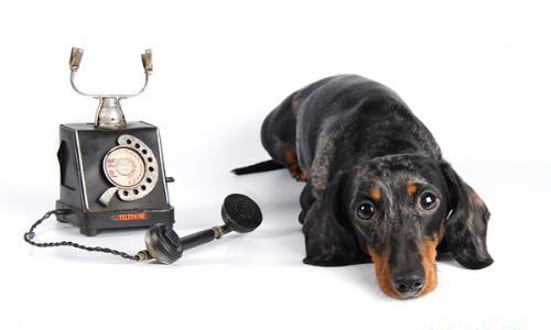 dogphone (500x300, 15Kb)