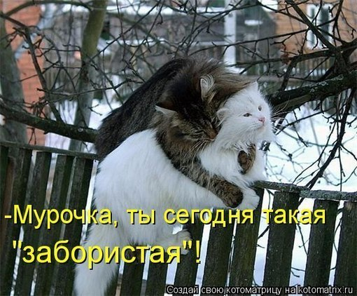 x_880e0954 (510x422, 76Kb)