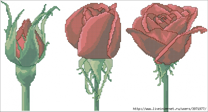 3971977_2307_Trio______Roses (700x378, 226Kb)