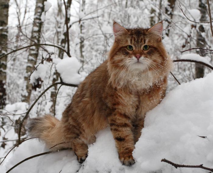 Категория: Блестяшки и анимашки с котами Просмотров: 308