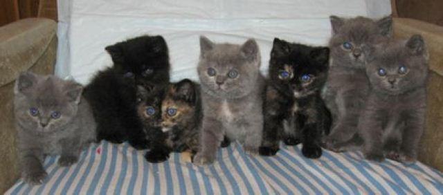 Фотографии котов 2 (640x282, 26Kb)