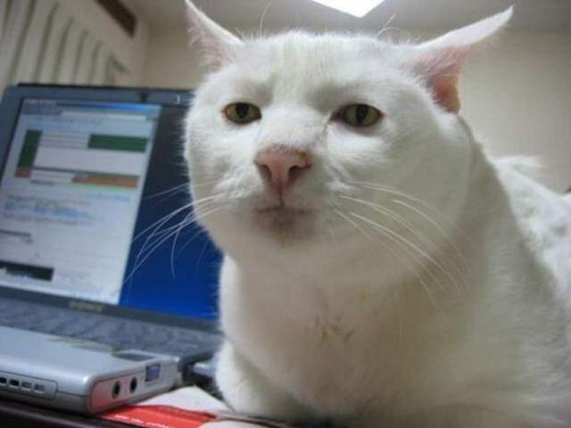Фотографии котов 8 (640x480, 29Kb)