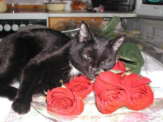 Фотографии котов 10 (640x480, 54Kb)