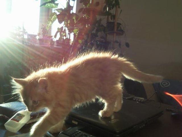 Фотографии котов 12 (640x480, 32Kb)
