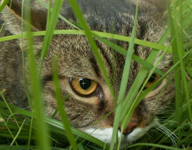 Фотографии котов 14 (640x498, 66Kb)