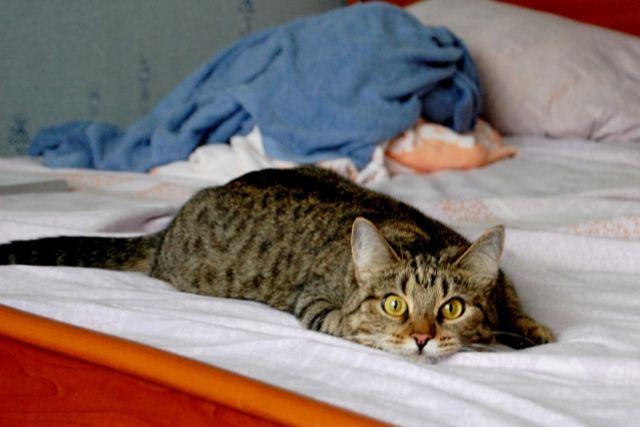 Фотографии котов 17 (640x427, 35Kb)