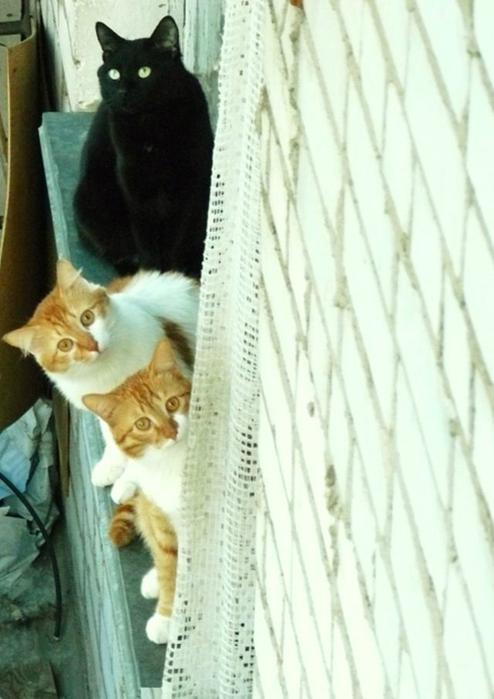 Фотографии котов 19 (494x700, 293Kb)