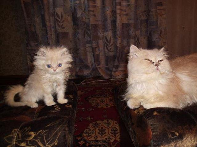 Фотографии котов 21 (640x480, 42Kb)
