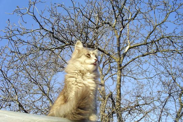 cat (600x399, 177Kb)