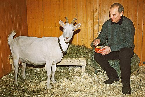 путин и коза (500x334, 265Kb)