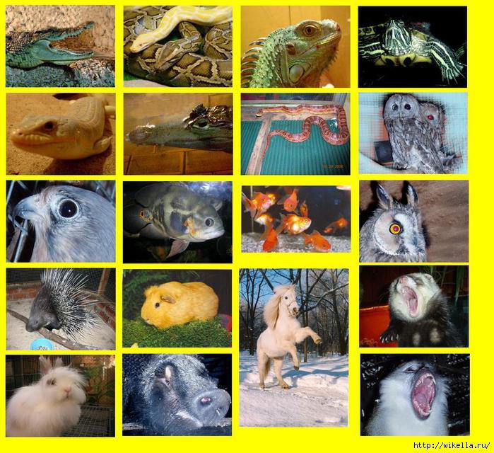 1_zoo (699x640, 277Kb)