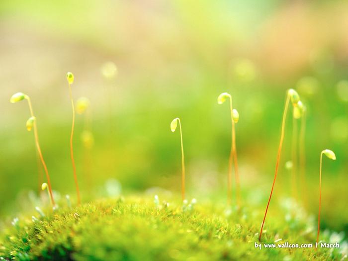 Весна природа красивая 1 (700x525, 105Kb)